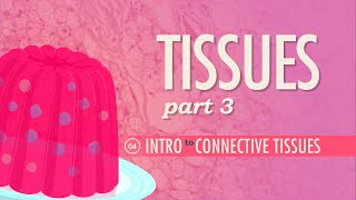 Tissues, Part 3 - Connective Tissues: Crash Course A&P #4