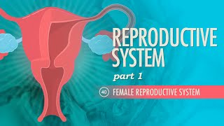 Reproductive System, part 1 - Female Reproductive System: Crash Course A&P #40