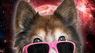 10 AMAZING Dogs With Sunglasses! -- BiDiPiGiFiTiWiPiBiCiMiFiDiFiTi #0