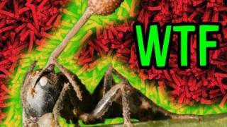 ZOMBIE Bugs!!!: Mind Blow 12
