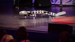 A robot that runs and swims like a salamander | Auke Ijspeert