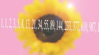 Sunflowers and Fibonacci - Numberphile
