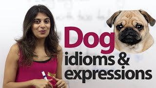 "Learn English Phrases & Idioms With ""dog"" - Free English lesson"
