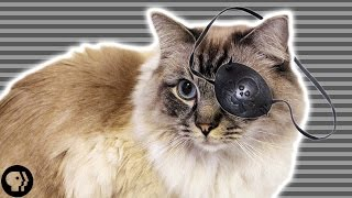 What Cats Taught Us About Perception