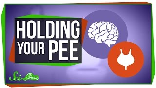 What Happens When You Hold Your Pee?
