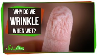 Why Do We Wrinkle When Wet?