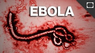 Will Ebola Be The Next Pandemic?