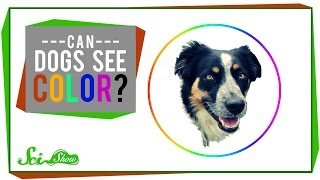 Can Dogs See Color?