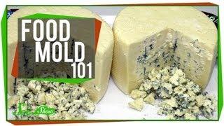 Food Mold 101