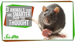3 Animals That Are Smarter Than You Thought
