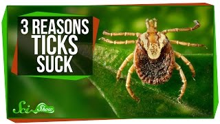 3 Reasons Why Ticks Suck