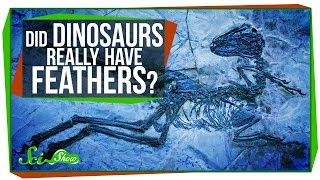 Did Dinosaurs Really Have Feathers?